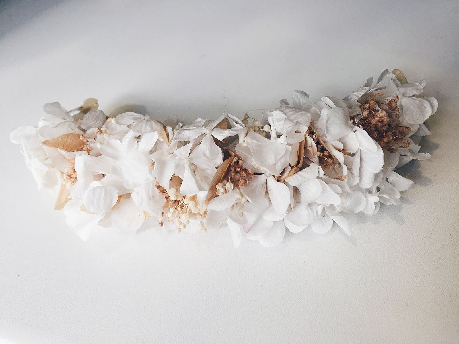 Semicorona hortensias preservadas